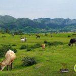 ¿Sabías que hay carne de Cantabria con indicación geográfica protegida?