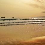 Un mar de oro