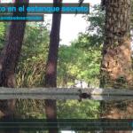 Un pato en el estanque secreto