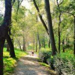 Árboles de altura en Mataleñas