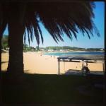 'La playa de Peligros tras una palmera'.  En la fotografía se ve una palmera, la playa de Los Peligros y la playa de La Magdalena con un bonito cielo azulado. Al fondo se ve la Península de la Magdalena. Autor: Carlos Lanza