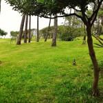Vuelo rasante entre los árboles de la Magdalena