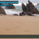 Cormoranes en la Arnía
