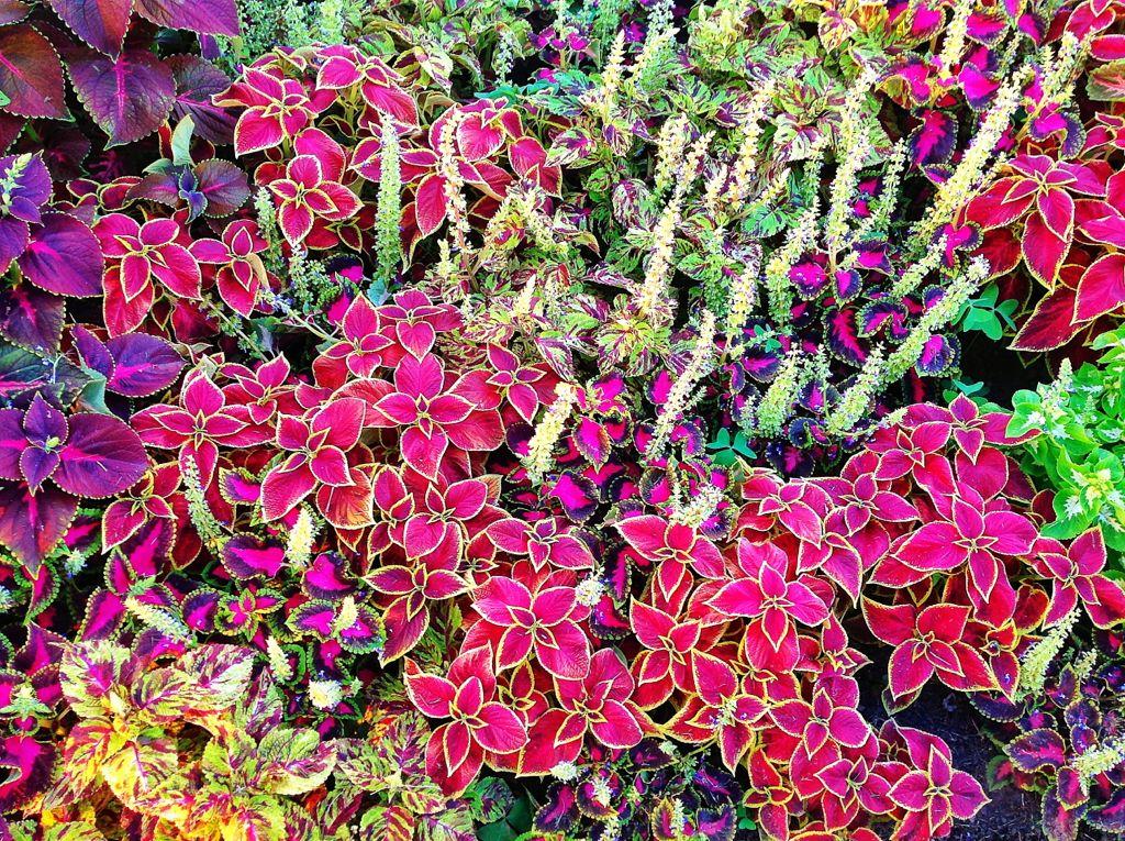 el-jardin-de-mi-recreo