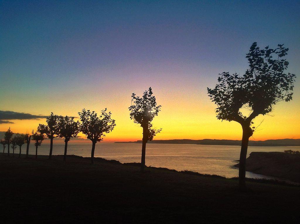 arboles-matalenas-amanecer