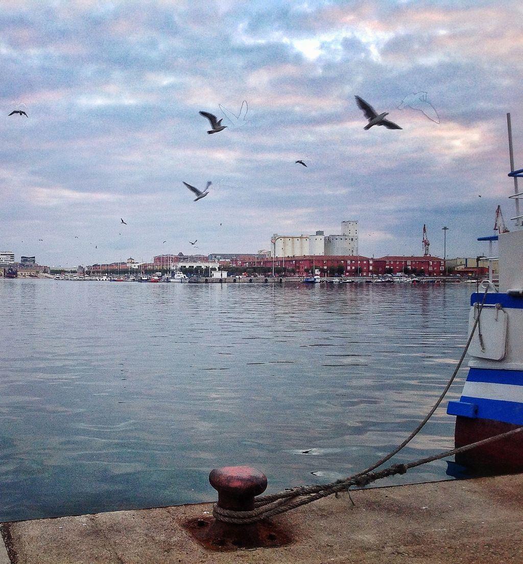 gaviotas-barrio-pesquero-santander