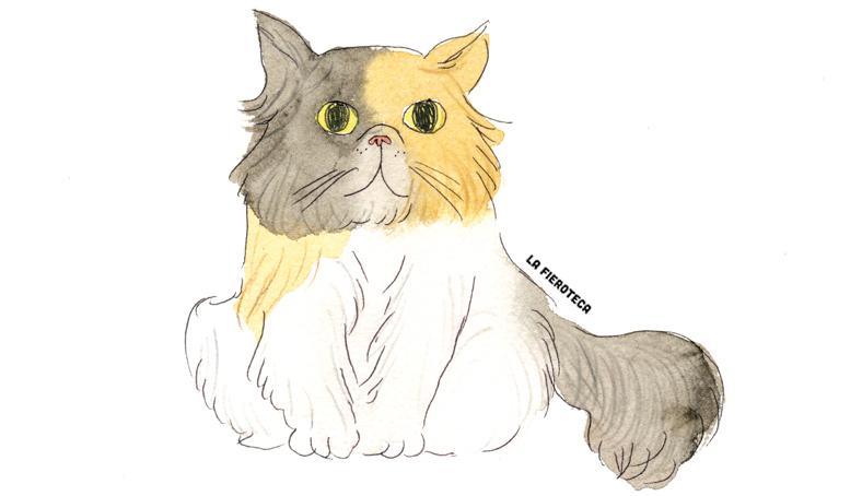la-fieroteca-gato