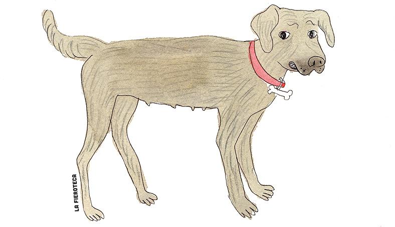 la-fieroteca-perro