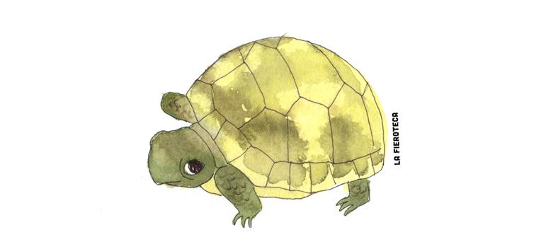la-fieroteca-tortuga