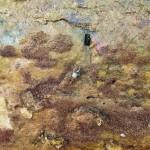 Una maragata en Puertochico