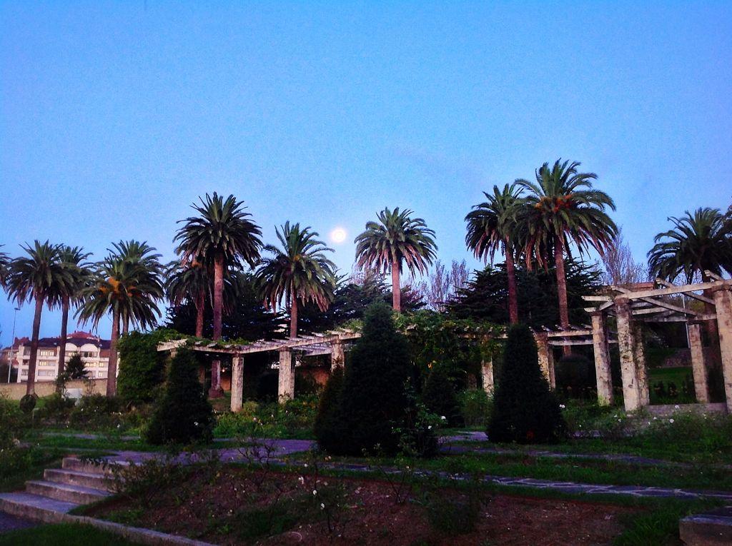 palmeras-luna-matalenas-santander