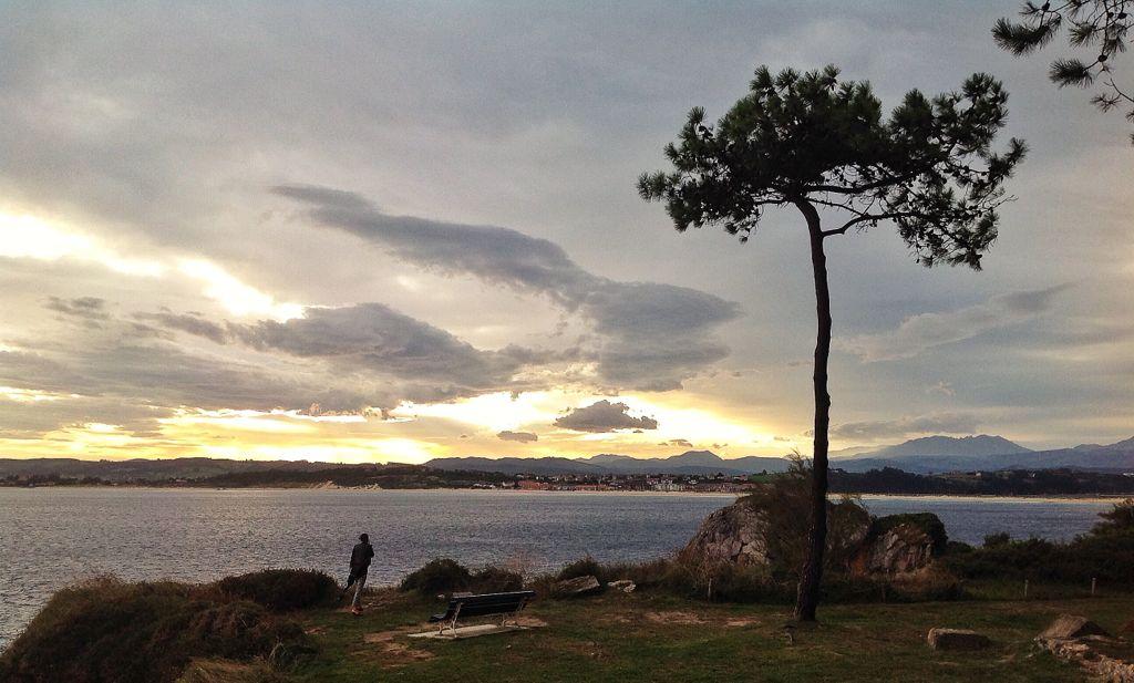 pino-a-la-intemperie-magdalena-santander