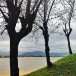 Árboles 'pelaos' con vistas a la bahía