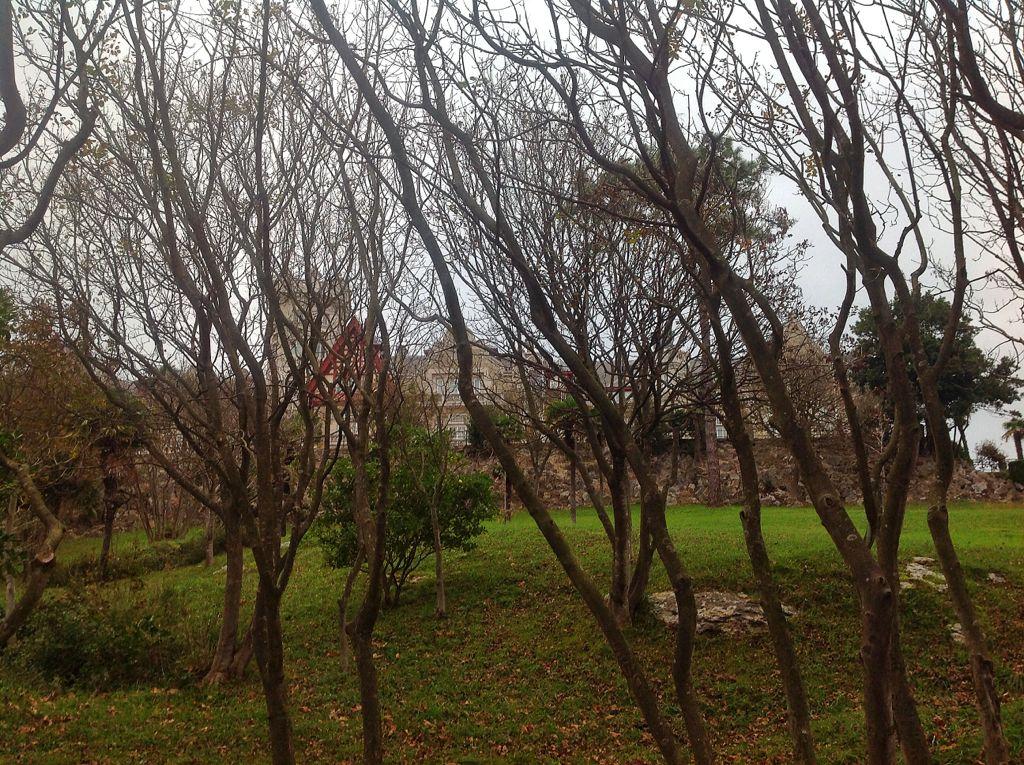 palacio-de-la-magdalena-entre-las-ramas