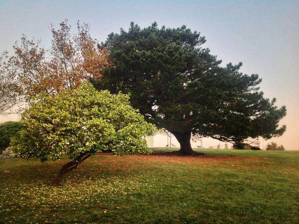arboles-magdalena-perenne-caduco