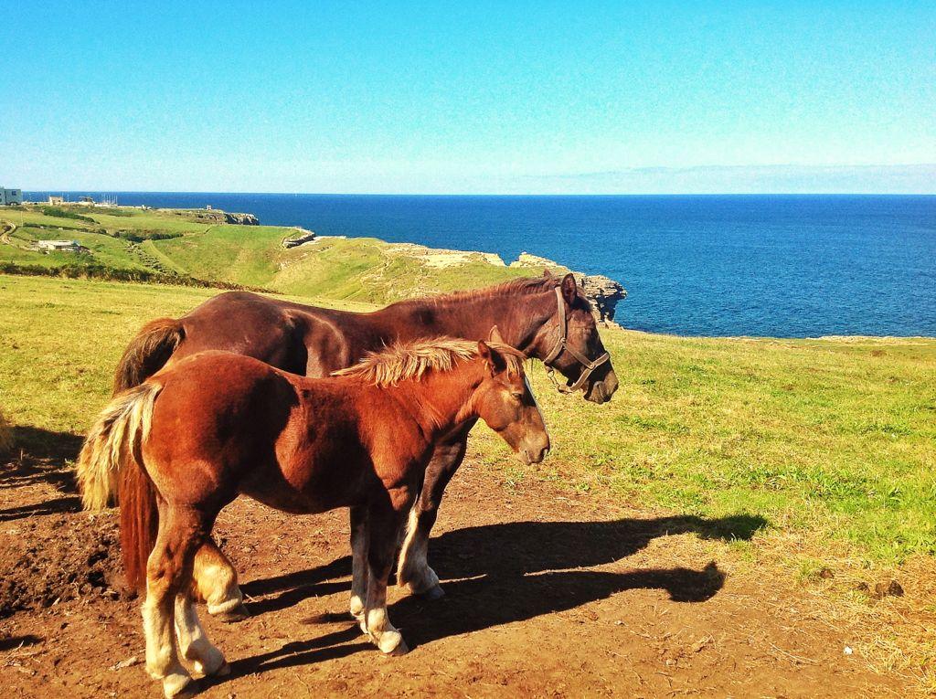 caballos-faro-santander