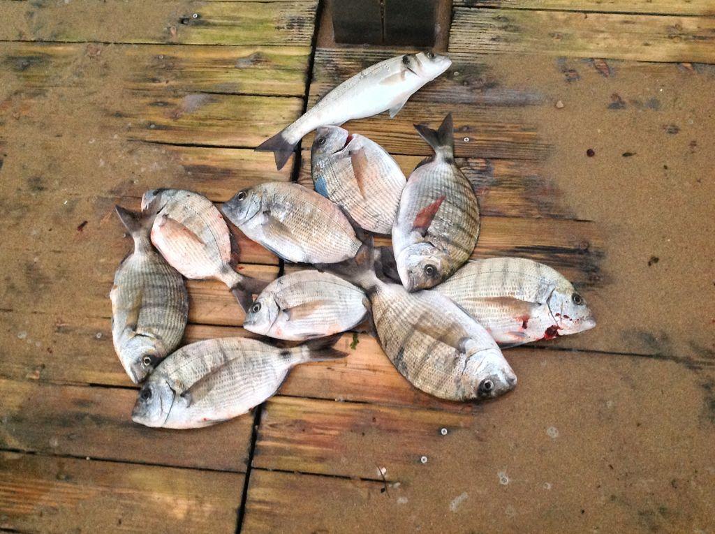 pesca-jargos-lubina