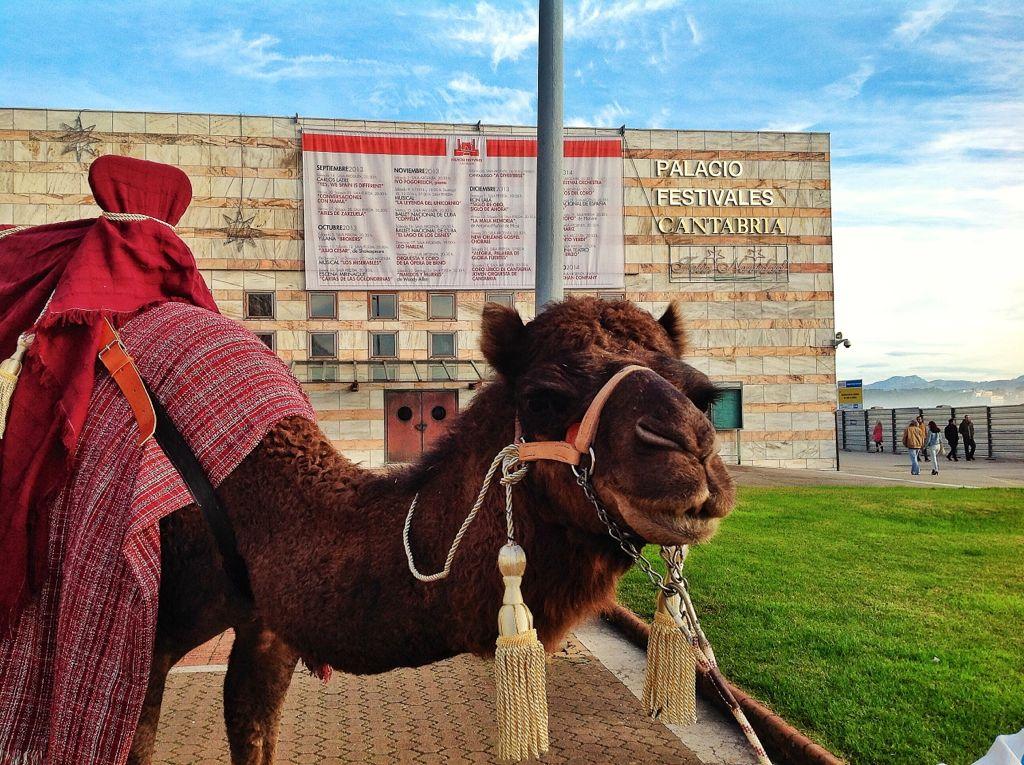 camello-reyes-magos-santander