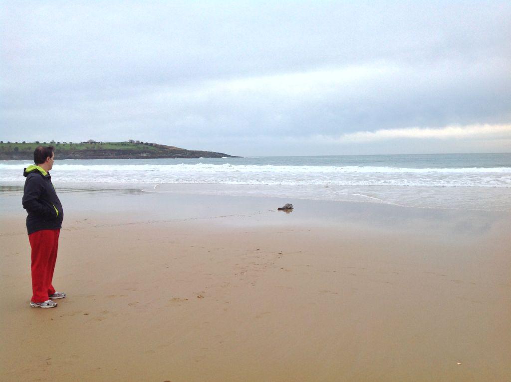 foca-sardinero-orilla-mar