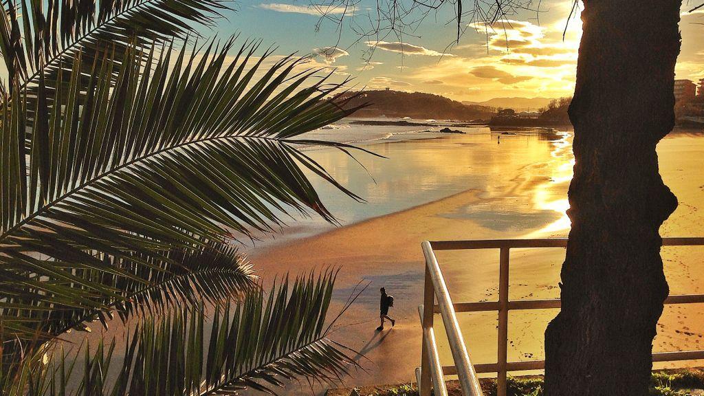 sardinero-tropico-palmera