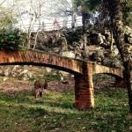 Un acueducto escondido entre la hojarasca de la Magdalena