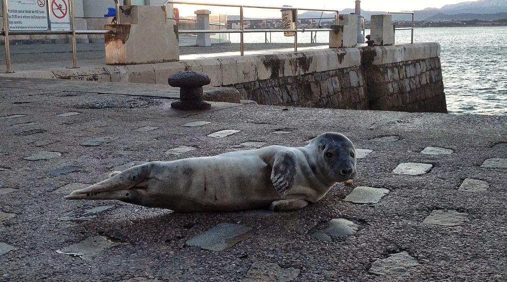 foca-embarcadero-muelle-calderon-santander