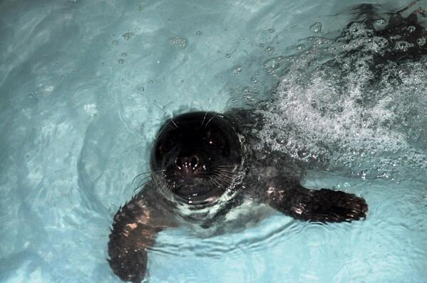 foca-maritimo