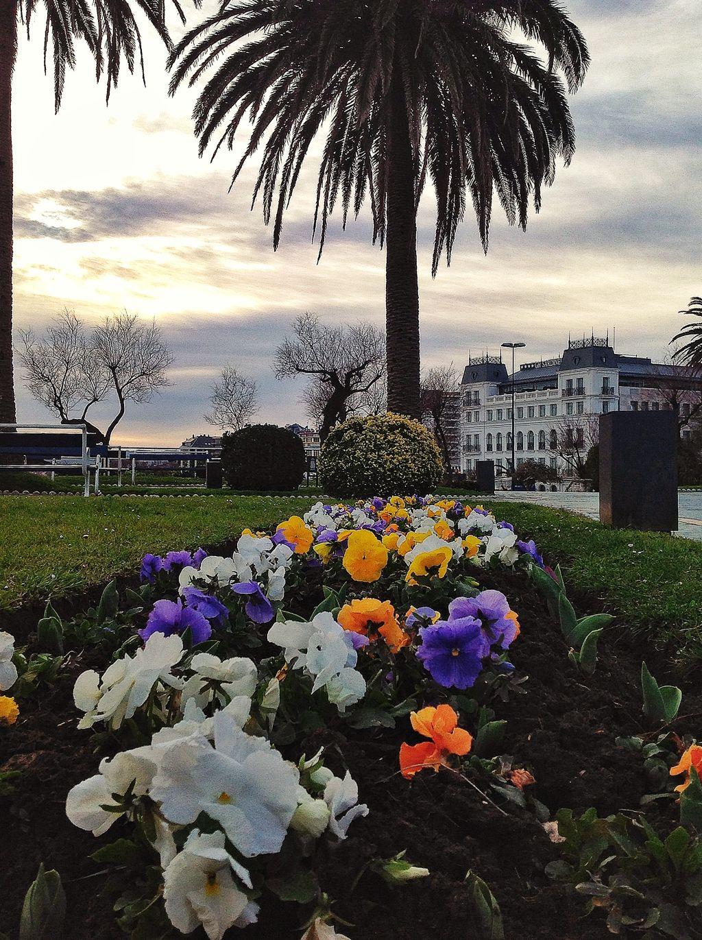 piquio-flores-santander