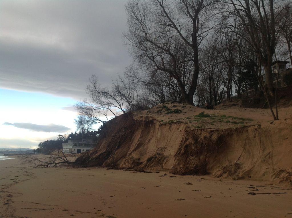 temporal-playa-magdalena-duna-arbol