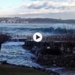 Las focas de la Magdalena juegan con las olas que invaden su casa