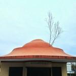 Un árbol sobre el tejado