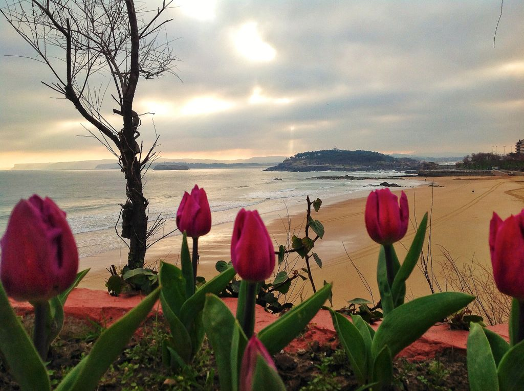 flores-primera-sardinero-santander