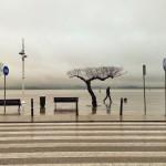 ¿Y si la bahía se convierte en una plaza de hormigón?
