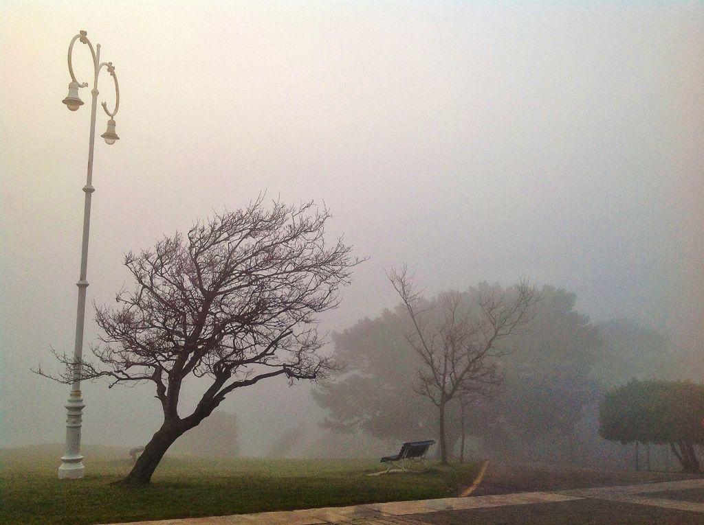 pino-magdalena-niebla