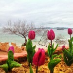 Tulipanes con vistas al mar