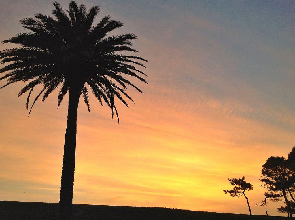 amanecer-palmera-amarillo-santander
