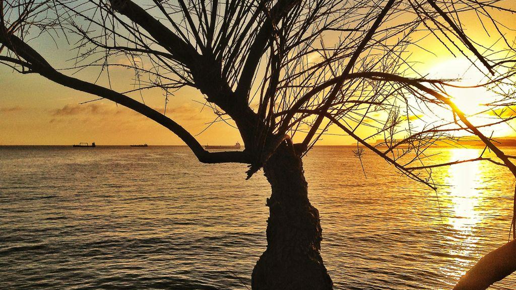 arbol-mece-barco-santander