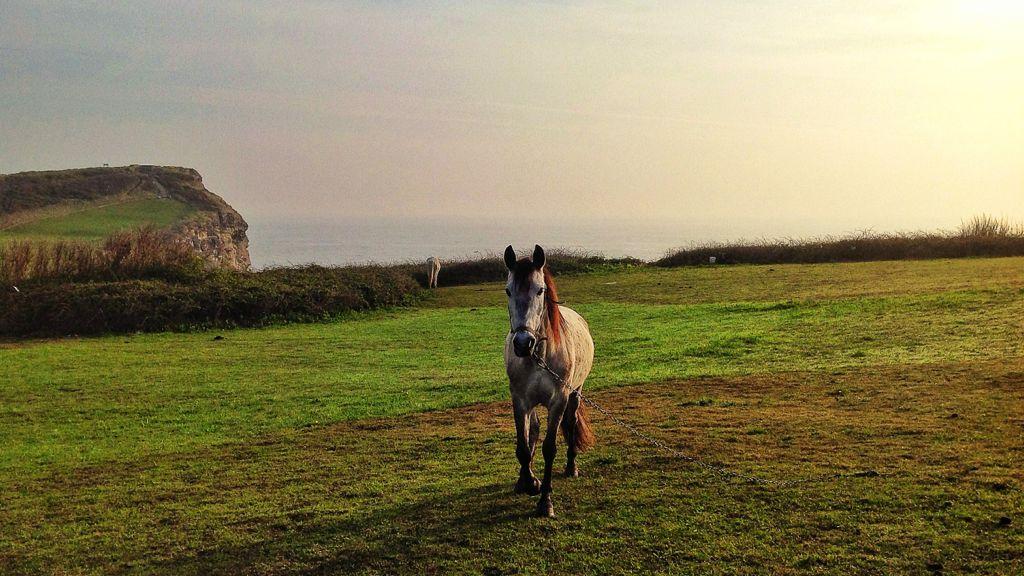 caballo-acantilado-mataleñas