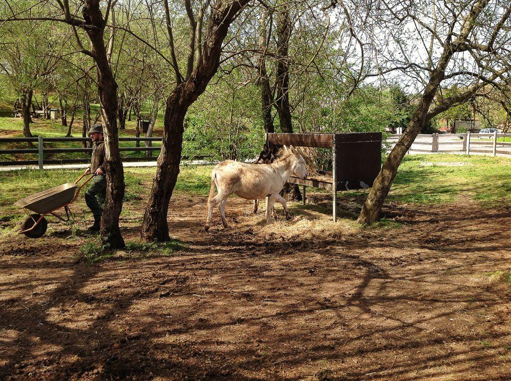 cabarceno-caballo