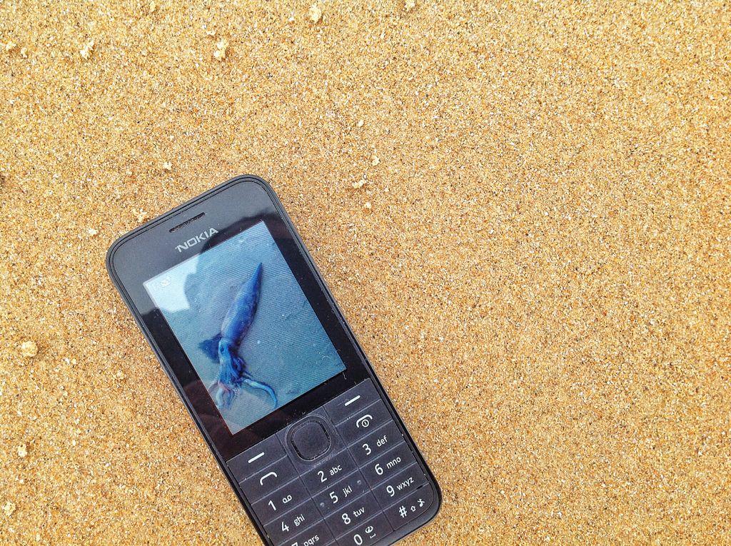 calamar-5-kilos-telefono
