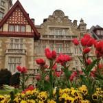 Las alegres flores de palacio