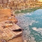 Las focas de la Magdalena estrenan piscina