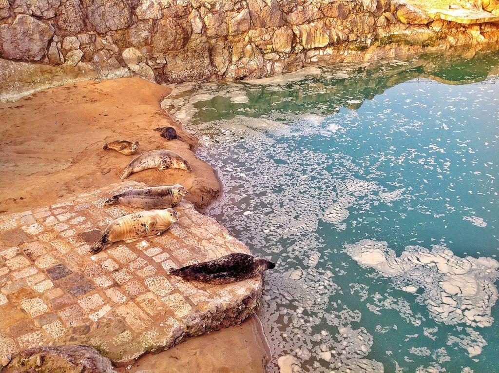 focas-piscina-estreno