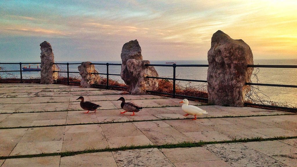 patos-magdalena-santander