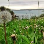 Sopla… quizá los pétalos lleguen hasta la isla de Mouro