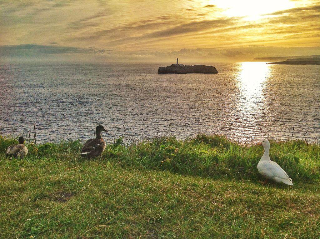 amanecer-mouro-nubes-patos