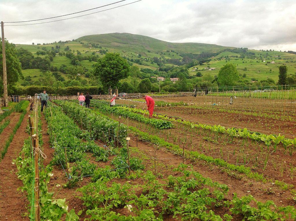 cultivar-la-tierra-villacarriedo