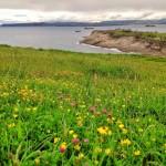 Flores salvajes y mar en calma