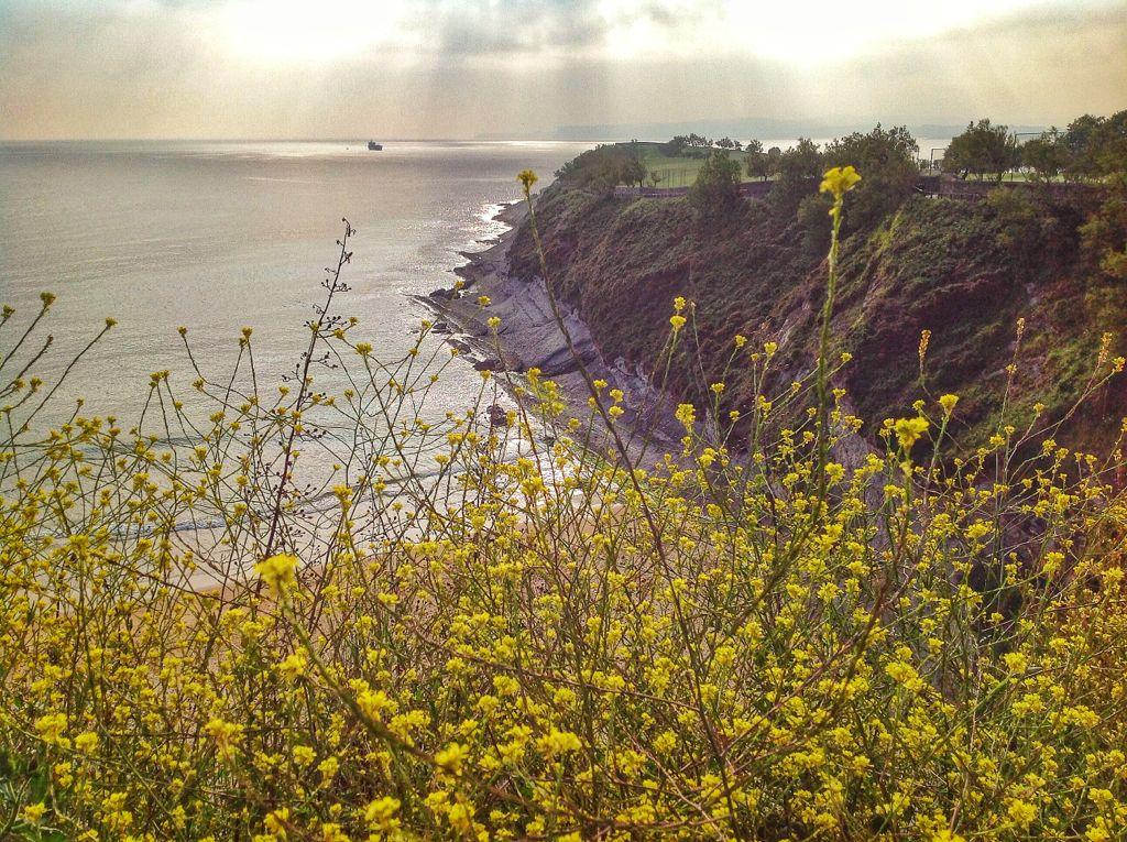 flores-mataleñas-santander-cantabria