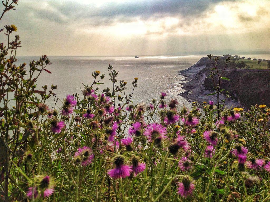 flores-mataleñas-santander